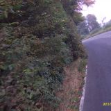 4/10/2015 Still not touched and dangerous. Bushes well out over the carriageway